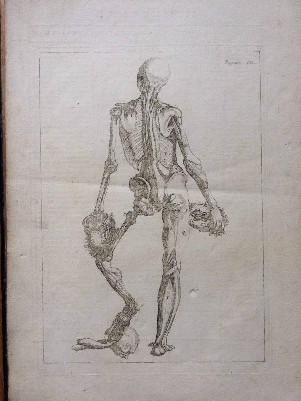Planches anatomiques