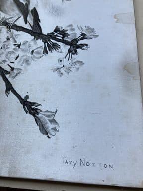 tavy notton les mésanges signature